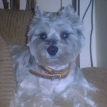 Bark Easy Pet Grooming Testimonials