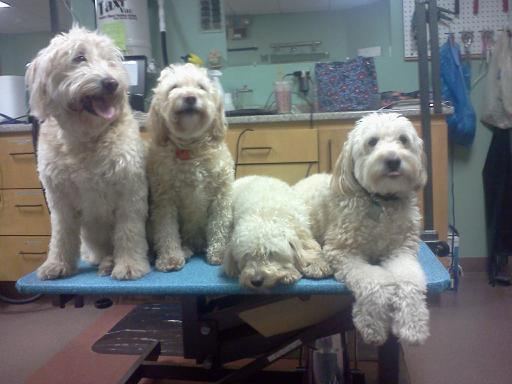 Sparky, Daisy & Penny